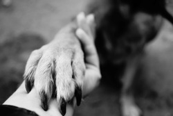 Dog paw takes woman hand. People support pets. Dog sits & gives his paw owner hand. Best friend. Human hand animal dog paw connection. The concept trust and friendship medicine. Female holding puppy