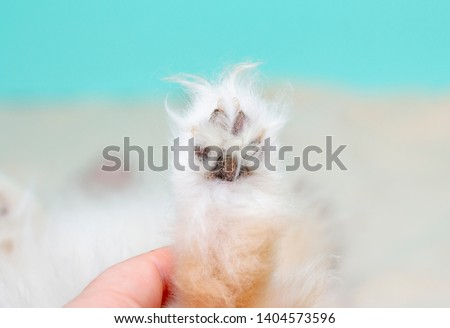 Dog paws, dog paws are dirty. Calluses on the dog's paws. Care for paws.