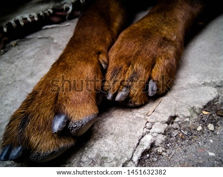 dog paws, rottweiler paws,cute paws
