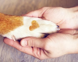Dog paws with a spot in the form of heart and human hand close up, top view. Conceptual image of friendship, trust, love, the help between the person and a dog