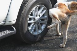Dog pee on wheels.