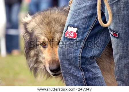 Dog Peeking Behind Owner's Leg - stock photo