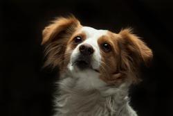 Dog Pet Animal Puppy White Canine Pedigree Doggy