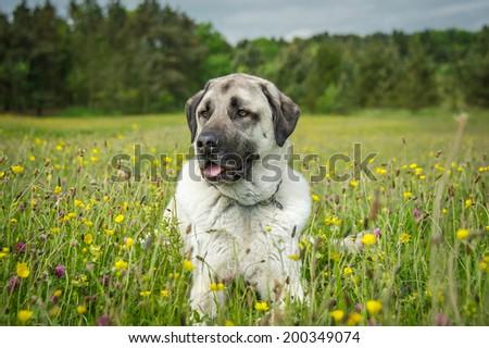 Dog Playing  #200349074