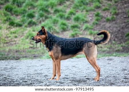 Dog playing at a park