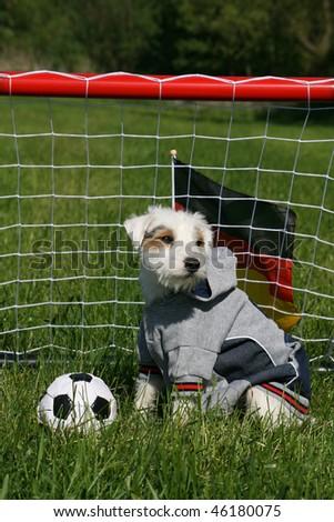 dog playing football