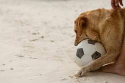 Dog playing football on the beach