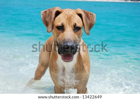 Dog playing in ocean