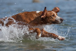 Dog playing in the water of the beach