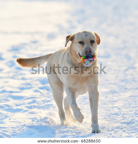 dog playing outdoor in winter