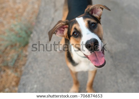 Dog playing outside smiles.Curious dog looking at the camera.Close-up of a young mix breed dog head outdoors in nature sticking out his tongue.Homeless mongrel dog waiting for a new owner.