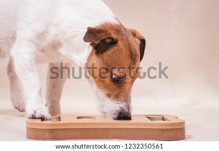 Dog playing sniffing puzzle game for intellectual and nosework training #1232350561