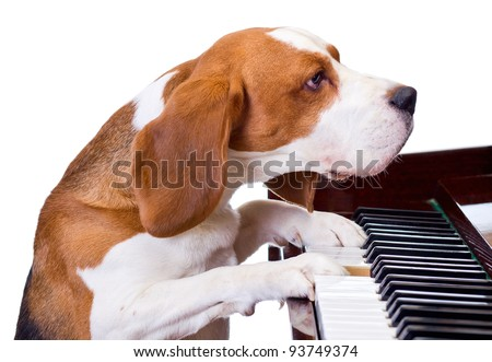 Dog playing the piano,white background.