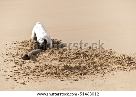 dog playing with a stick in the sand