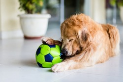 Dog playing with old green soccer ball