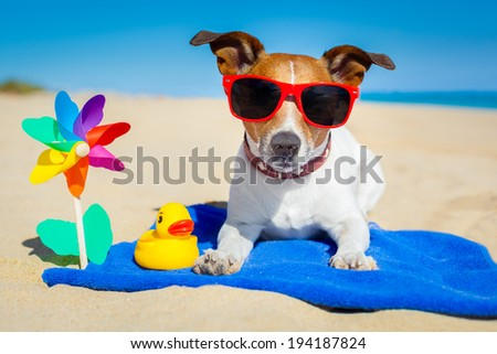 dog plays with sunglasses at the beach on summer vacation holidays #194187824