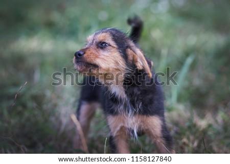 Dog portrait - Dog shelter #1158127840