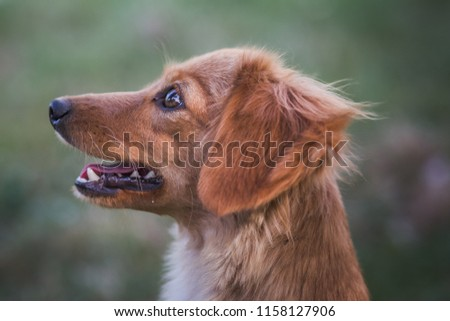 Dog portrait - Dog shelter #1158127906