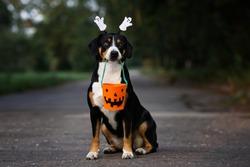 dog portrait holding a basket for Halloween