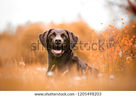 Dog portraits in nature and city #1205498203