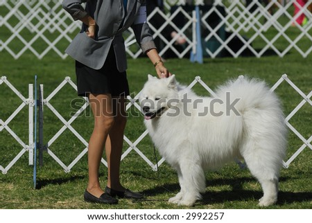 dog poses with handler for the judges