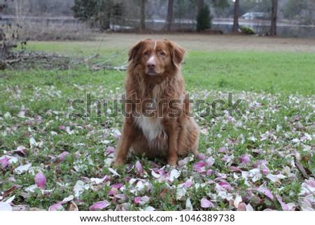 dog posing pic #1046389738