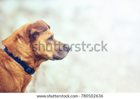 dog profile with copy space, proud animal looks forward