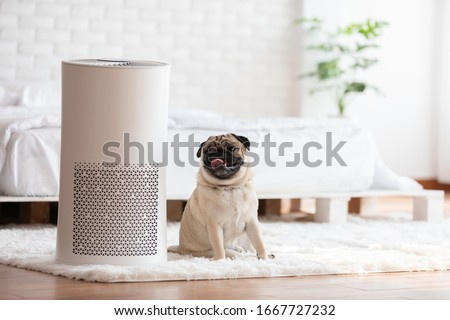 Dog Pug Breed and Air purifier in cozy white bed room for filter and cleaning removing dust PM2.5 HEPA in home,for fresh air and healthy life,Air Pollution Concept