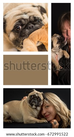 Dog pug shows behavior in three pictures - Copyspace