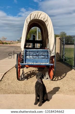 Dog pulls wagon in Yuma Arizona