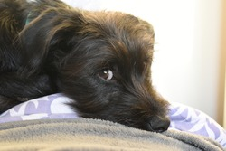 Dog, puppy, funny, paws, little dog, eyes, black, stray dog, adopt, lovely look, adorable puppy, best friend, dogs life