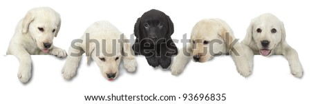 Dog puppy white and black cut out on white background