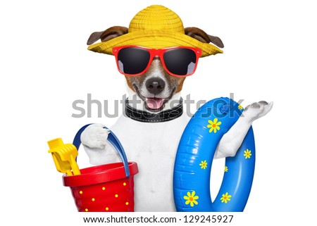 dog ready for beach with bucket,swim ring and funny hat