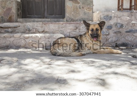 Dog resting by the shadow