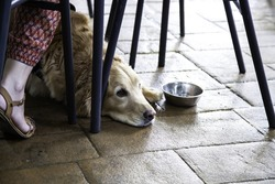 Dog resting in bar and drinking water, domestic animals, pets