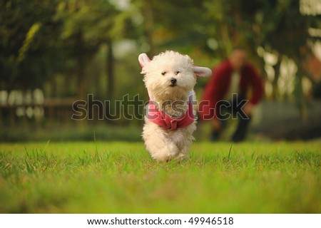 dog runing on the grass