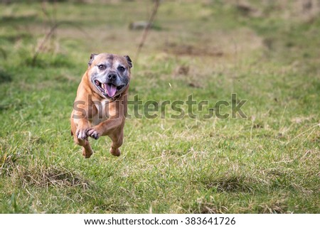 Dog Running and Playing #383641726