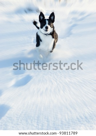dog running in the snow, side view motion blur