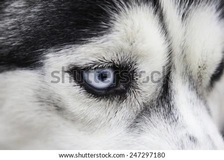 Dog's eye #247297180