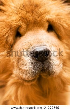 dog's nose #21299845