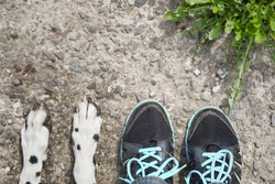 dog's paw feet next to the owner -- friendship