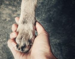 Dog's paw in human hand. vintage tone image symbolizing dog and human friendship and relations. Subtle dog's paw hold by bigger human hand to protect.