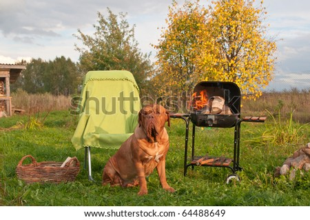 Dog's Picnic With Barbecue (Grill) Set With Burning Fair