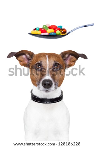 dog scared of a spoon full of pills
