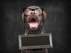 Dog school teacher with nerd glasses against blackboard with empty sign board as collar around his neck with space for own text