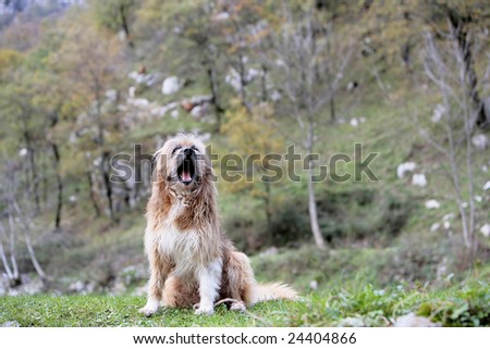 dog seated with open mouth