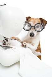 Dog sewing white clothes. Cute pet Jack Russell terrier in glasses looking at camera working at sewing machine sews white t-shirt. Fashion designer tailor in light white workshop. Vertical photo