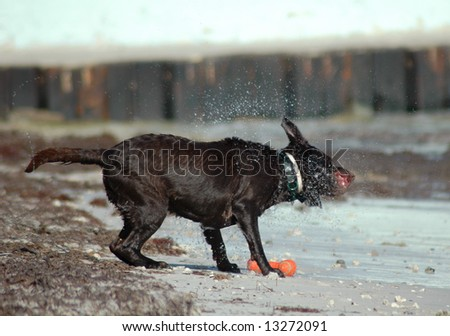 Dog shaking off water after swimming