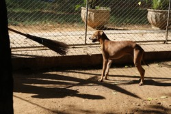 Dog shelter in Thailand, Dog Rescue