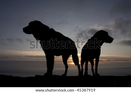Dog silhouette against an Isle of  Anglesey sunset